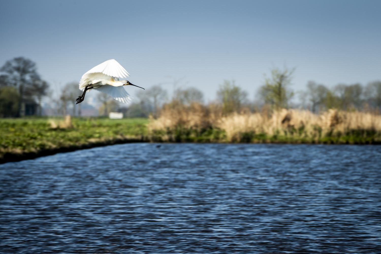 wonen in Gouda water natuur Westergouwe